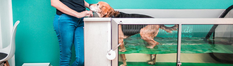 Vierbeiner Tierphysiotherapie